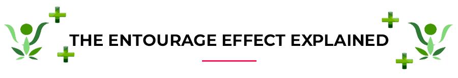 The entourage effect explained