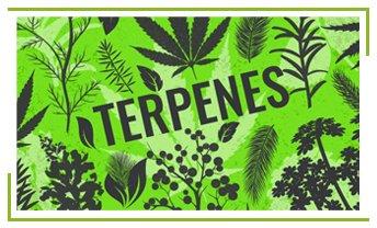 terpenes_1